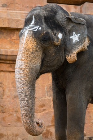 Elephant in Indian temple. Tamil Nadu Stock Photo - 21162707