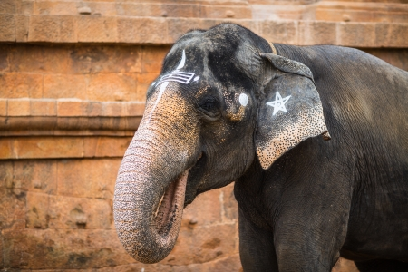 wilds: Elephant in Indian temple. Tamil Nadu Stock Photo