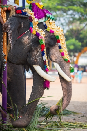 Elephant in Indian temple. Tamil Nadu Stock Photo - 21162807