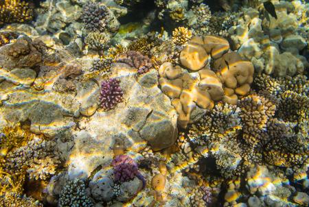 el sheikh: Diving in Sharm El Sheikh Stock Photo