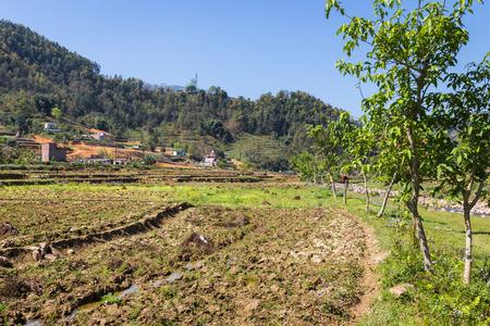 pokhara: Spring rice field near the Nepalish sity Pokhara Stock Photo