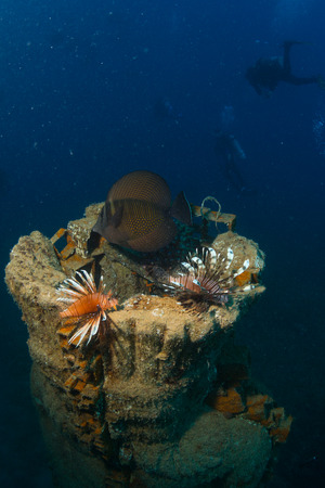 Lionfish on the wreck Lighthouse near the city Dahab in Egypt