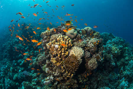 cant: Tropical fish on background of a coral reef