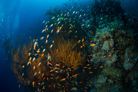 fish eye: Tropical fish on background of a coral reef