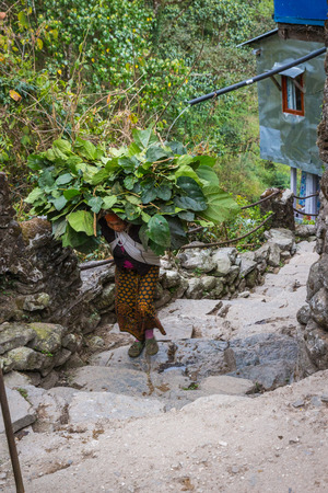 porter house: NARCHYANG, NEPAL-MARCH 18: Himalayas people 18, 2015 in Narchyang, Nepal. People on the track to the Annapurna Base Camp.