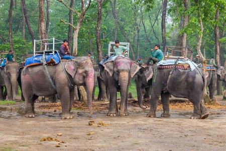grazer: CHITWAN, NEPAL-MARCH 27: Elephant safari 27, 2015 in Chitwan, Nepal. Elephant ride in the Chitwan National Park.