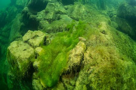 The underwater landscape in freshwater