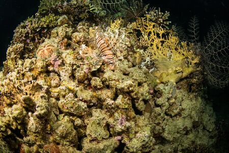 cryptic: A coral reef at night