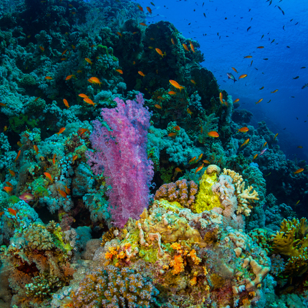 Hermoso jardín de coral en el Mar Rojo Foto de archivo