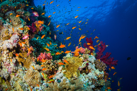 polyp: Beautiful coral garden in Red Sea