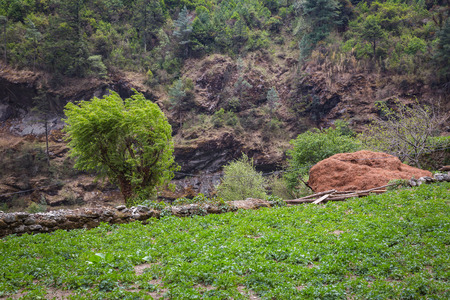 sherpa: Field in the sharpas willage on the track to the Everest Base Camp Stock Photo