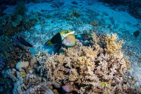 star fish: Beautiful coral garden in Red Sea