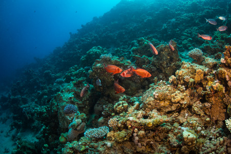 sharm: Tropical fish on background of a coral reef