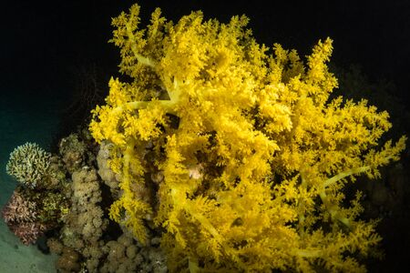 A coral reef at night