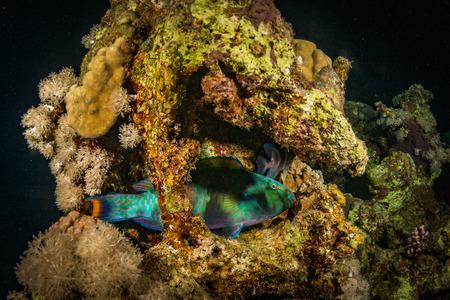 star fish: A coral reef at night