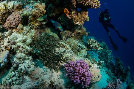 Diver on the reaf of Red sea Stock Photo