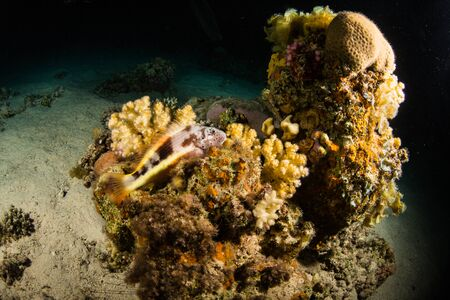 living organism: A coral reef at night