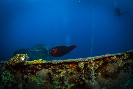 to drown: Buceador en el barco de transporte militar británico hundido durante la Segunda Guerra Mundial