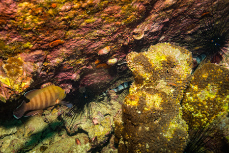 koh tao: Underwater snake on Koh Tao Stock Photo