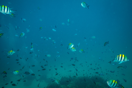 on coral reef of Koh Tao