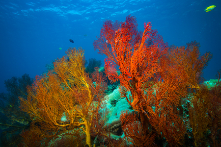 Coral garden on Bali. Indonesia