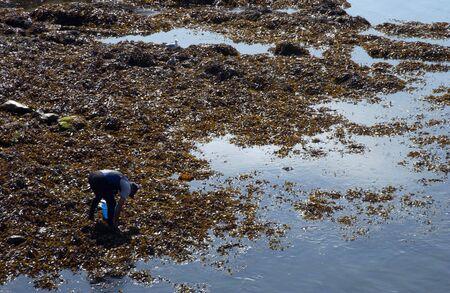 seaweeds: Seaweeds in the port