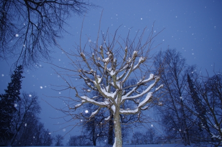 Winter night fairy-tale in the Lower Park of Peterhof  Look,is there someone is hiding