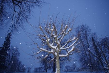 Winternacht sprookje in de Tweede Park van Peterhof Kijk, er is iemand verbergt Stockfoto