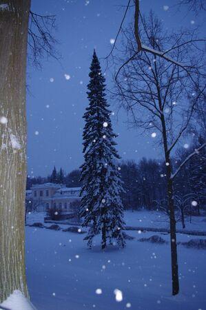 Sint-Petersburg Peterhof Een wandeling in de Tweede Park op een winteravond