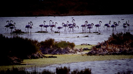 roze flamingo's Stockfoto