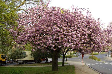 Blooming tree. Stock Photo