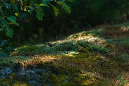 Sun glare on the moss in the forest. Cool shadow on a hot day Stock fotó