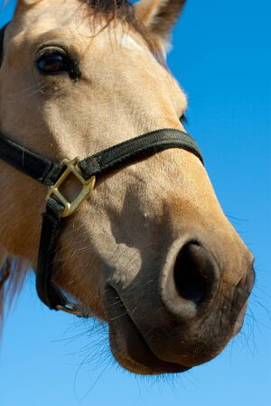 Close up head shot of beautiful horse Stock Photo - 11873509