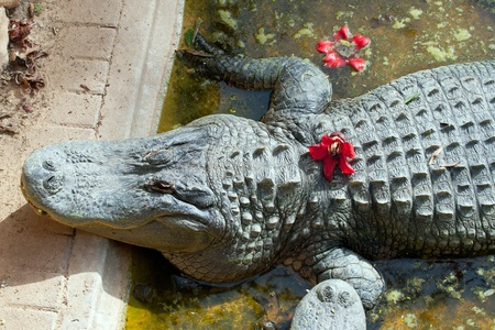 alligator eyes: Cute crocodile with flower