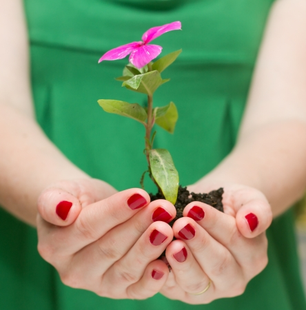 Female hands holding holding flower plant photo