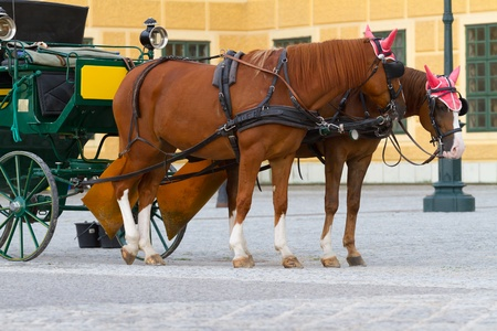 Carriage with horses for hire in Vienna Austria in front of Schonbrunn Palace