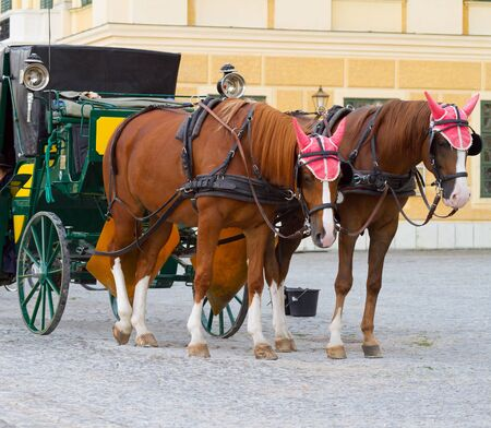 chariot: Carriage with horses for hire in Vienna Austria in front of Schonbrunn Palace