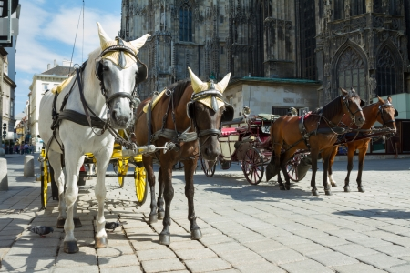 Horse-drawn Carriage in Vienna at the famous Stephansdom Cathedral photo