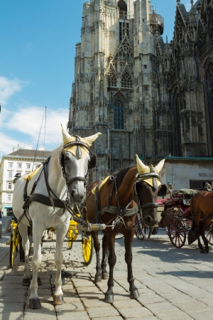 Horse-drawn Carriage in Vienna at the famous Stephansdom Cathedral