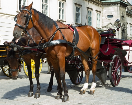 horse cart: Horse-drawn Carriage in Vienna at the famous Stephansdom Cathedral Editorial