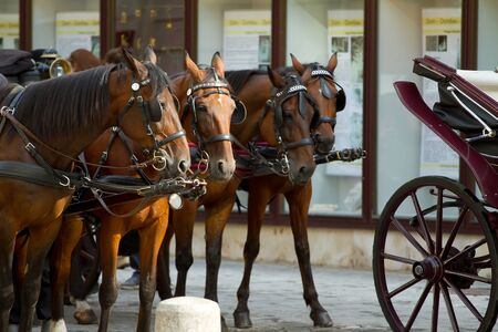 Horse-drawn Carriage in Vienna photo