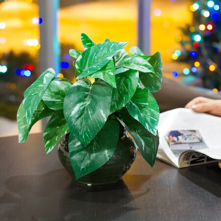 Man reading a magazine at Christmas Stock Photo - 17065758