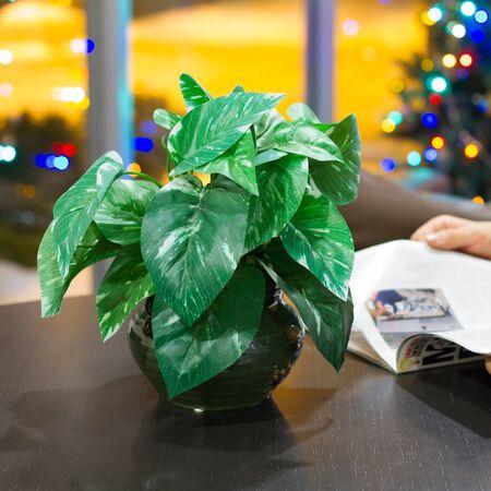 Man reading a magazine at Christmas Stock Photo - 17065758