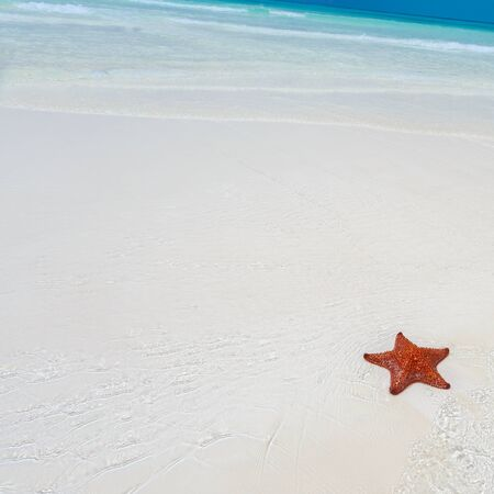 clear water: Starfish in clear water