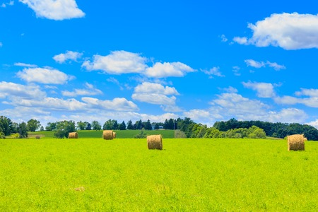 Round hay bales on the green field in the suburbs of Toronto, Canada.
