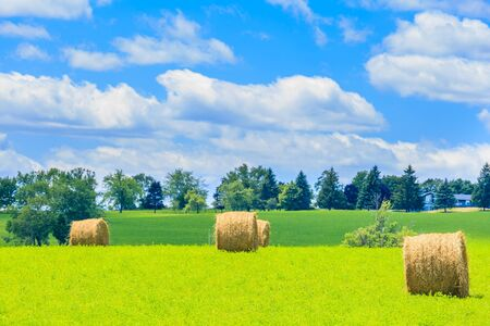 canada agriculture: Round hay bales on the green field in the suburbs of Toronto, Canada.
