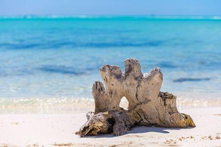 waterscape: Tropical sandy beach of Cayo Largo island