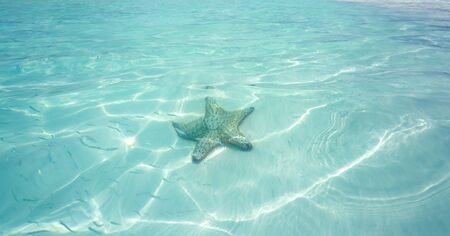 white water: Starfish in clear water of the sea Stock Photo