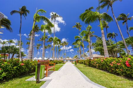 walking path: Walking path with palm trees at tropical beach in Aruba Stock Photo
