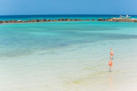 standing water: Flamingos on the Aruba beach. Flamingo beach